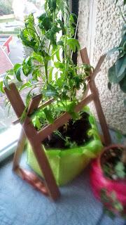 tuteurs en carton pour tomates