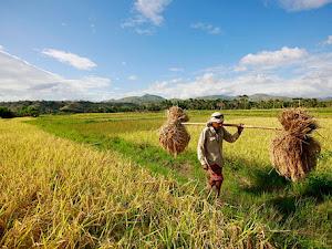 Perjuangan Para Petani - Puisi Untuk Para Petani