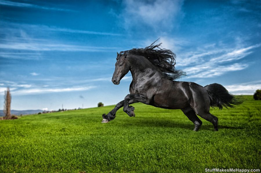Graceful Horse Pictures that Will Delight Your Day