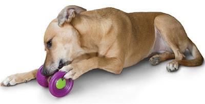 Busy-Buddy-Ultra-Woofer-Dog-Treat-Toy