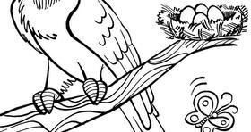 Desenhos Online Para Colorir E Imprimir Arara E Borboletas Para