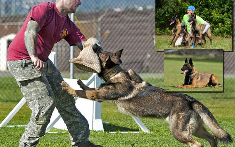 Σκύλοι πιστοί στα αφεντικά τους και σκύλοι εκπαιδευμένοι για να τους προστατεύουν. (βίντεο)