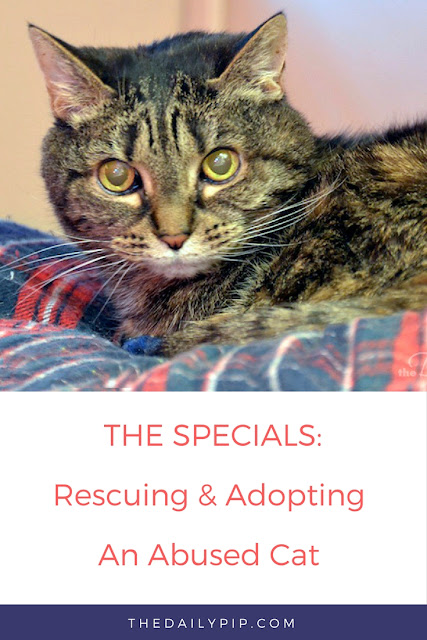 How to rescue, rehabilitate and adopt an abused cat Pin