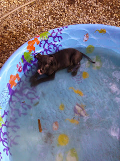 the baby first pool