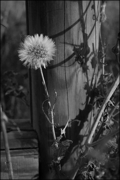 mucia,naturaleza,fotografia