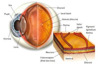 Cara Mengobati Ablasio Retina Tanpa Operasi