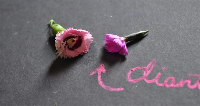 edible_wildflowers_5