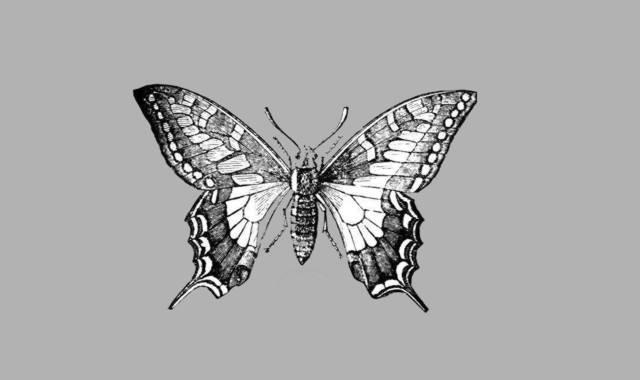 Gedichte Und Zitate Fur Alle Das Lied Vom Schmetterlinge