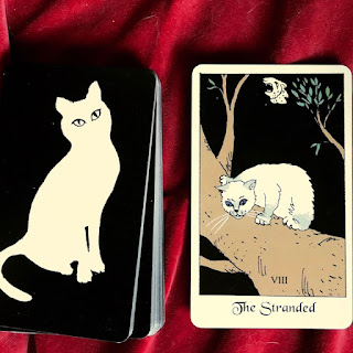 The Stranded Cat card from the White Cat Oracle Deck by artist David Borden