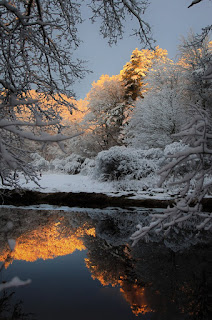 winter scene of sunlit, snow covered trees reflected in clear calm water