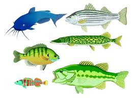 Glossary of Fish Names / English to Tamil / Fish Names in Tamil