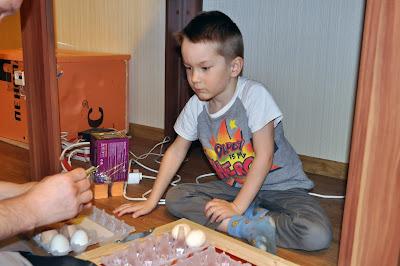 Закладка яиц в самодельный инкубатор