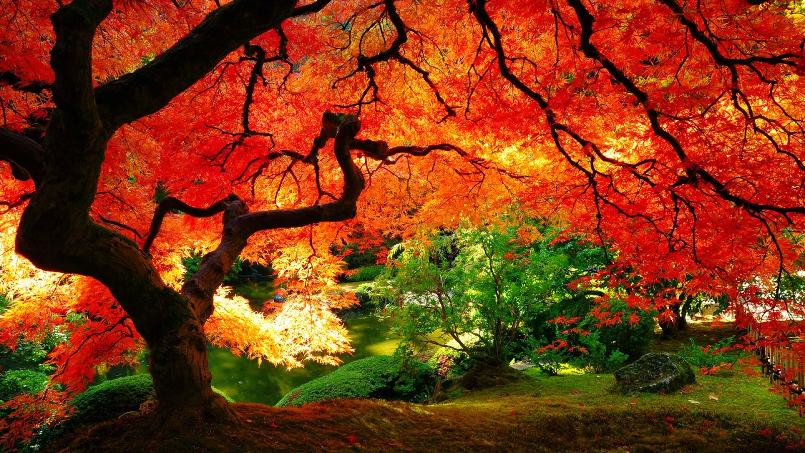Free Fall Nature Wallpaper Autumn Desktop Wallpaper 2014 Picture Gallery