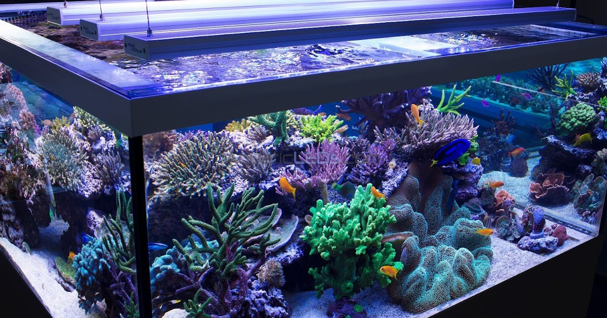 Aquarium Led Lighting Choose The Best Led Aquarium Light