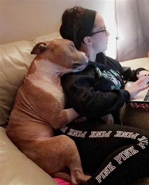 Perro rescatado de refugio muestra pleno agradecimiento