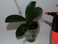 orchid water spray