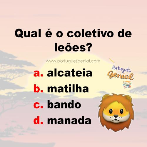 Coletivo de leões - Qual é o coletivo de leão?