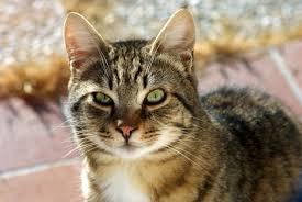 Petua elak bulu kucing gugur