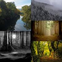 Imagens de nevoeiro em floresta misteriosa