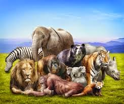 Group of wild animals together - photo#36