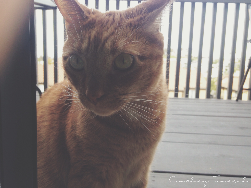 Courtney Tomesch Cruz Ginger Cat
