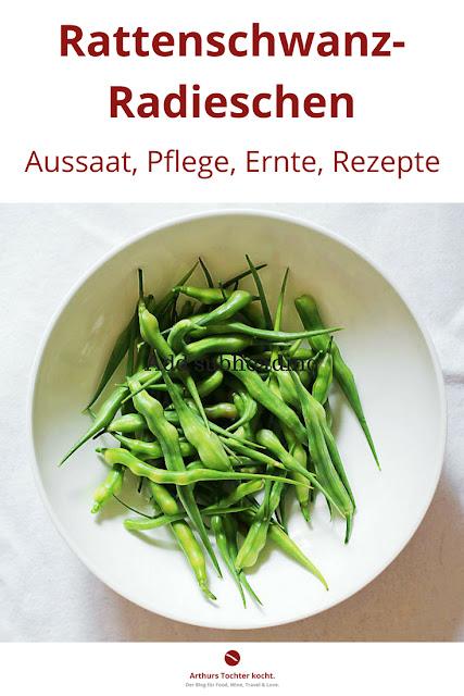 Rattenschwanz-Radieschen. Aussaat, Pflege, Ernte und Rezepte von Arthurs Tochter kocht. #radieschen #rattenschwanz_radieschen #anbau #gemüse #gesund #garten #ernte #zubereitung #salat #dip #suppe #gesundheit #einlegen