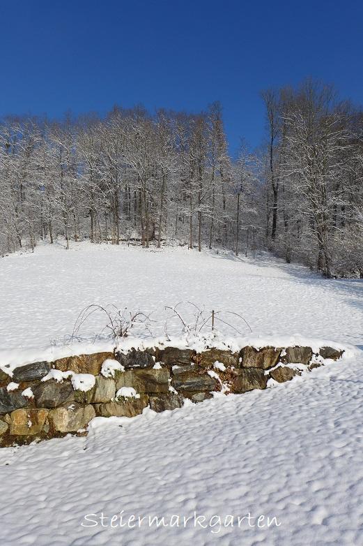 Jännergarten-Steinmauer-und-Wald-mit-blauem-Himmel-Steiermarkgarten