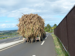 Transport de la canne à sucre à la Réunion