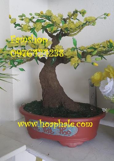 Goc bonsai cay hoa mai tai Tran Quoc Vuong
