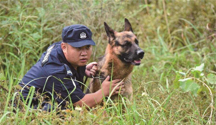 An insight into police dogs in training
