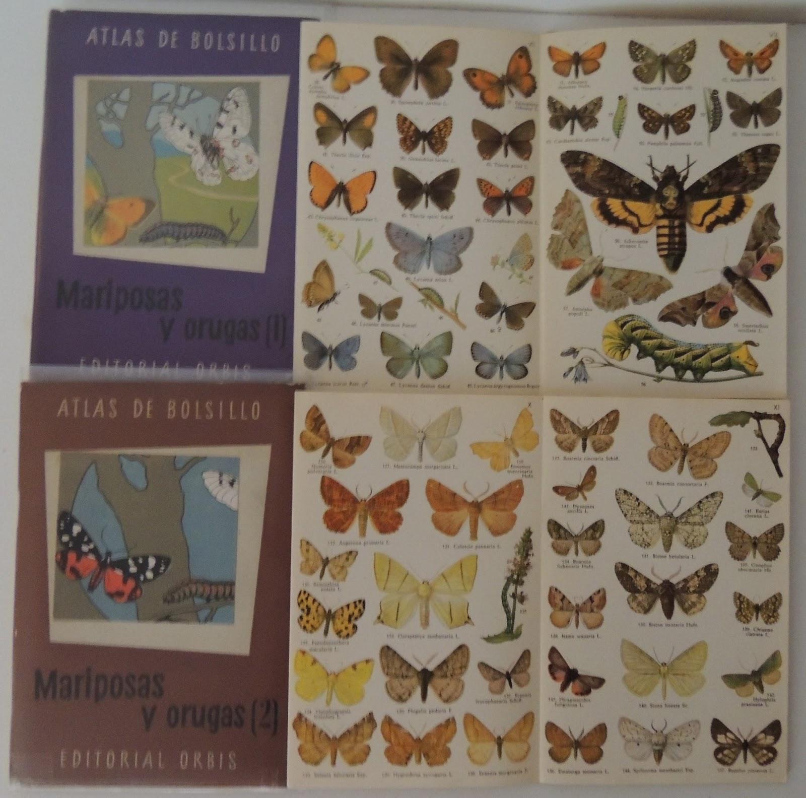 Atlas de mariposas y orugas de la fauna europea