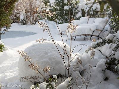 verschneiter Garten mit Gehölzen - auch im Winter kann ein Garten schön sein