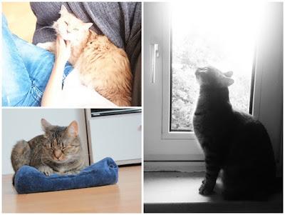 Wochenrückblick - Sunny Sunday #98 - www.josieslittlewonderland.de - kolumne, josie bloggt, katzen, katzenliebe, fellnasenliebe, lilli und marshall