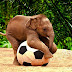 Best Animals Elephant Wallpapers and Backgroundsand download Free