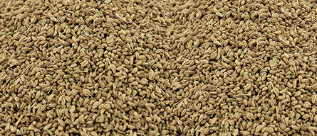 Ajwain (Carom seeds) in Cholera