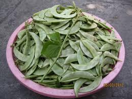 Hướng dẫn cách trồng đậu ván sạch tại nhà trên sân thượng