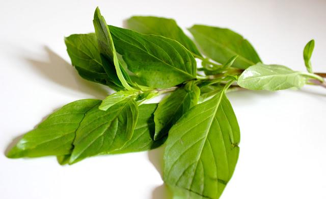 Le Chameau Bleu - Recette de tartare Vietnamien - ingrédient Basilic Thaie