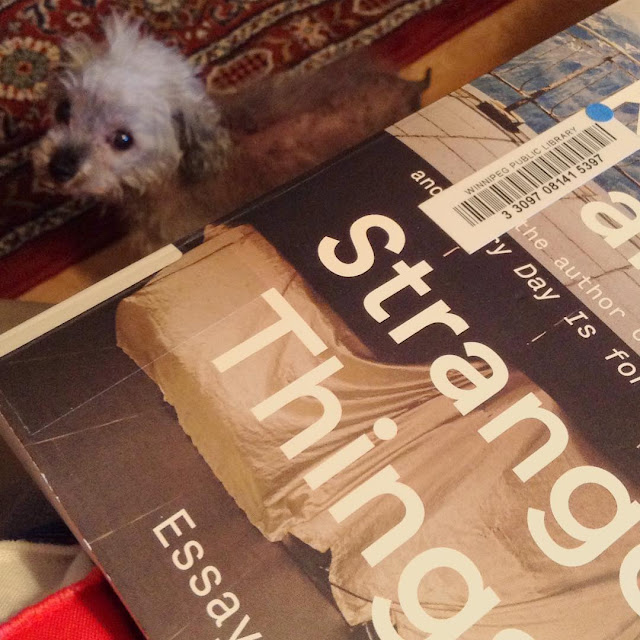 Murchie stands on the floor, his head craned up to look over his shoulder at the viewer. Closer to the camera and some distance above Murchie is a trade paperback copy of Known and Strange Things. Its cover features a photograph of a balcony with something covered in a white drop sheet on it.
