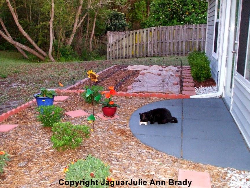 Feeding the Black Tom Cat 033114