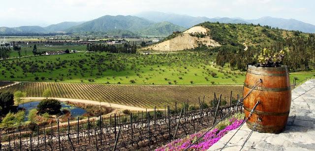 Conhecer as vinícolas em Santiago no mês de agosto