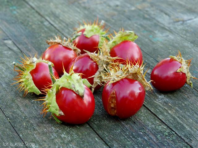 kolczasty pomidor liczi - owoce