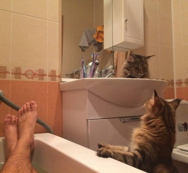 Funny cats - part 236, cute cat photos, best cat images, funny cat pics
