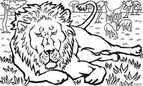 Best African Lion Coloring Pages For Free