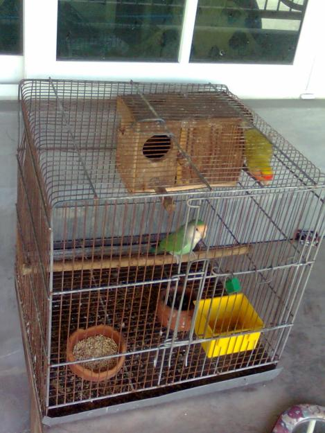 how to start a bird breeding business