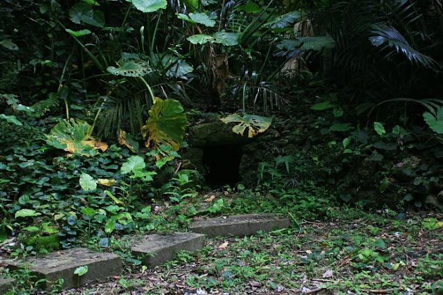 ウンブガー(イビの森)の写真