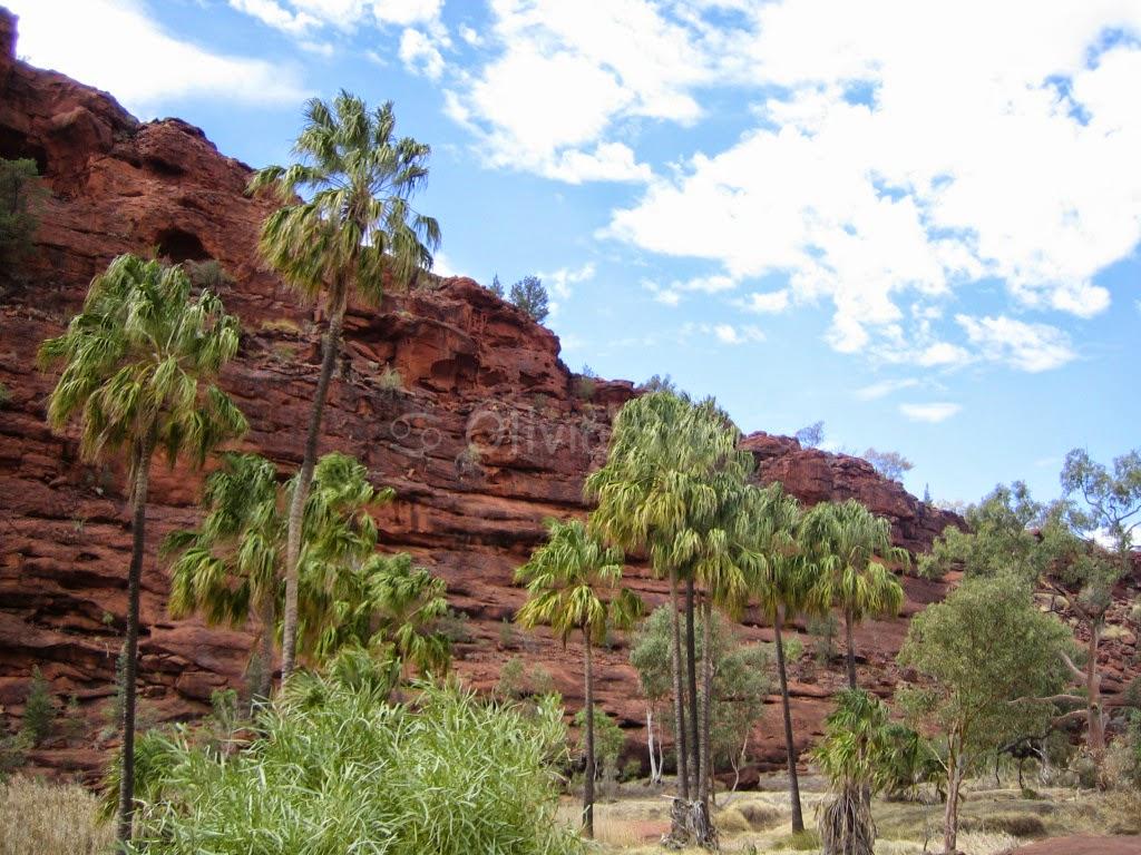 Palm Valley, Australie