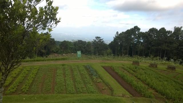 Davao City Destinations, Eden
