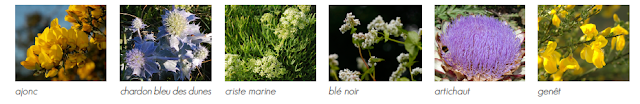 l'herbier Nominoe