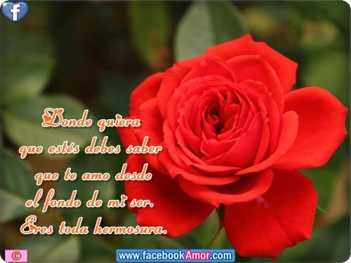 Rosas Rojas Con Frases De Amor: Imagenes D Rosas Bellas