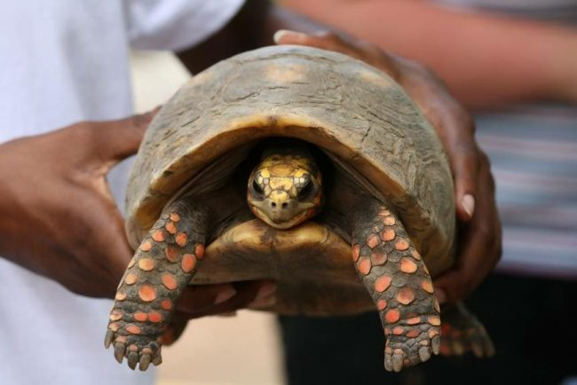 Family Cleaned Their Storage Room And Found Their Tortoise, Missing Since 1982